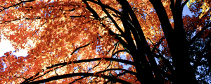 fall leaves, finding the kingdom of God in everyday life